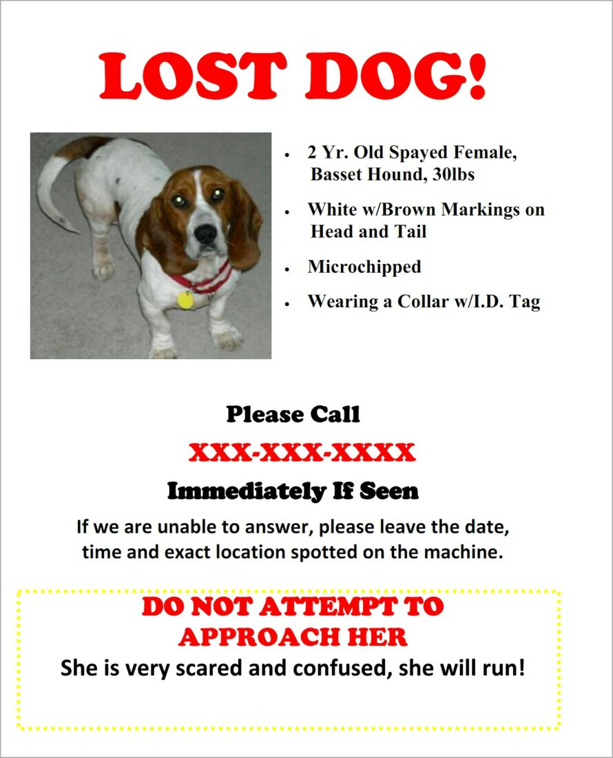Missing Dog Flyer Template Free