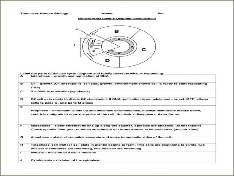 Mitosis Worksheet And Diagram Identification
