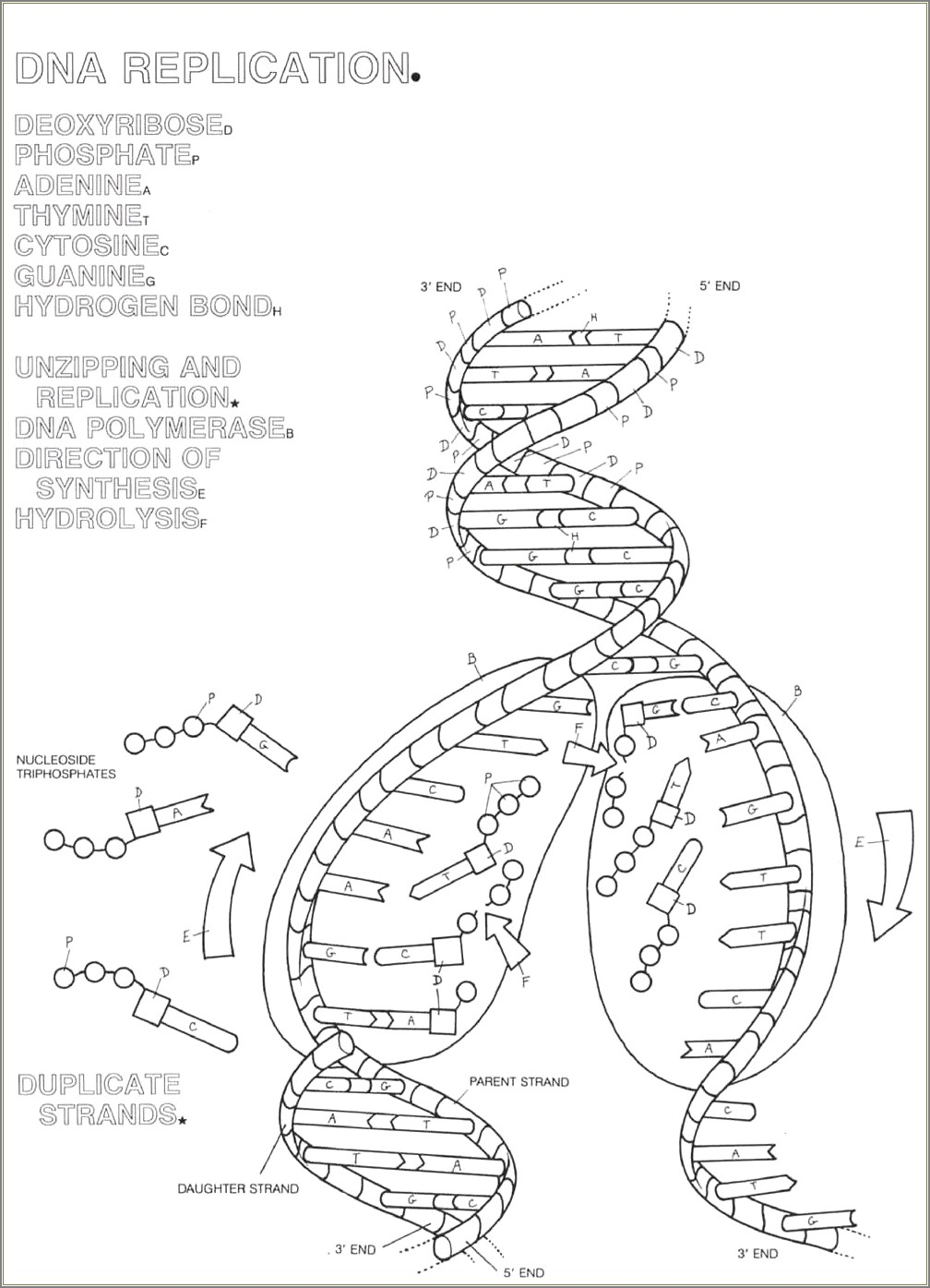 Protein Synthesis Worksheet Fill The Diagram In