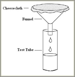 Strawberry Dna Extraction Diagram
